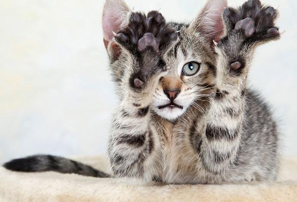 draskykle katems