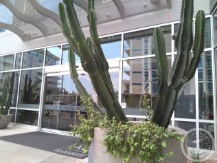 Colegios privados Arizona (126)