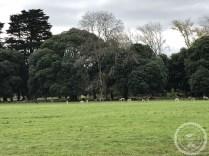 Irlanda (234)