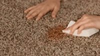 Ways to Get Rid of Carpet Mold - International inside