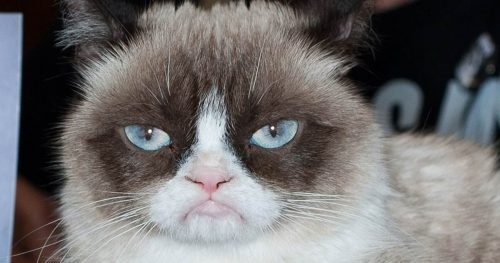 The internet mourns after Grumpy Cat dies