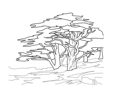 3167-coloring-pages-דפי-צביעה-טו-בשבט