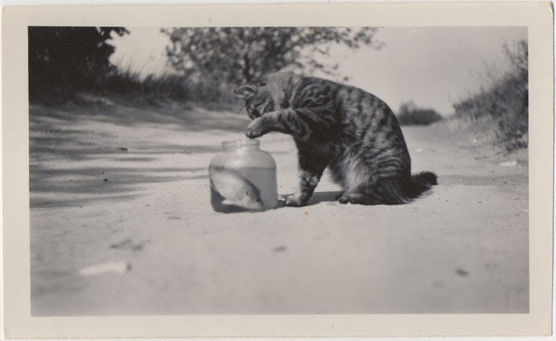 Cat-with-fish-in-jar-on-country-road-1940s
