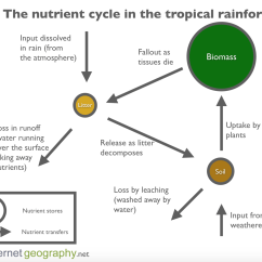 Diagram Of A Tropical Forest 2004 Jeep Grand Cherokee Wiring The Nutrient Cycle In Rainforest Internet Geography
