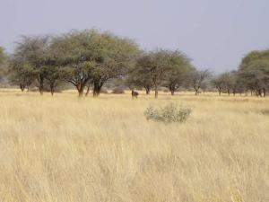 image of the African savanna grasslands