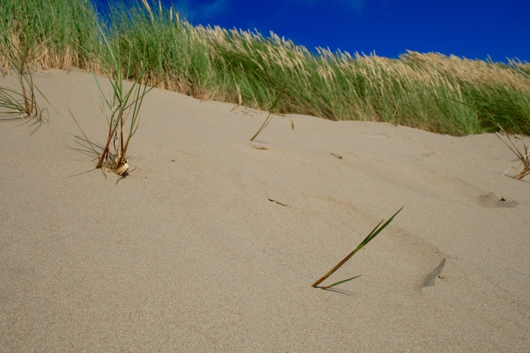 Sand Dunes at Harlech Beach, North Wales.