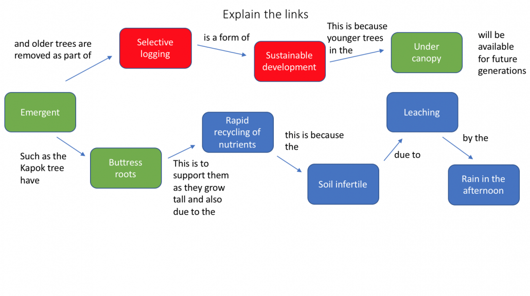 Tropical Rainforest Concept Map Links explained