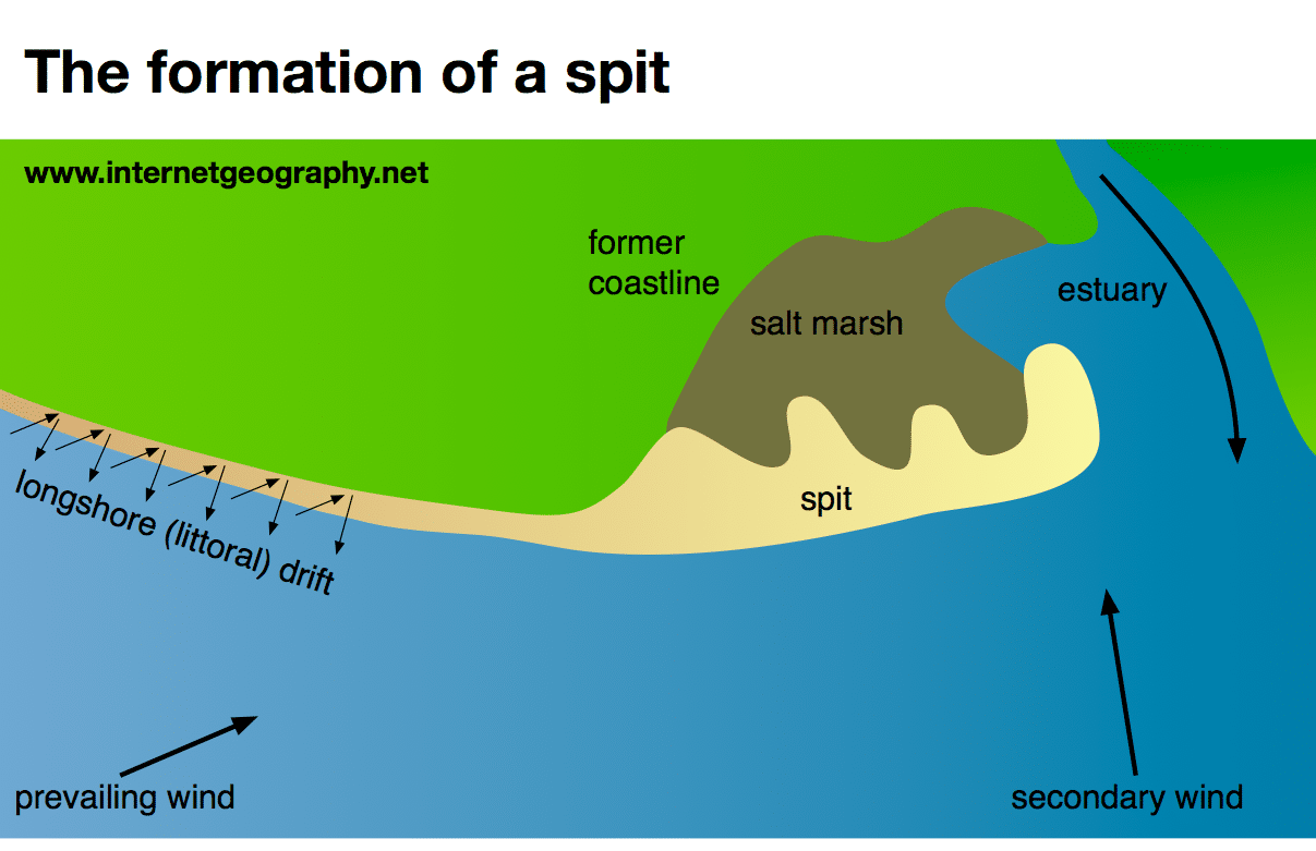 diagram of dune formation structure hydra sand topsimages