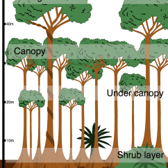 Amazon Rainforest Layers Diagram 02 Silverado Radio Wiring What Is The Structure Of Tropical Internet Geography In