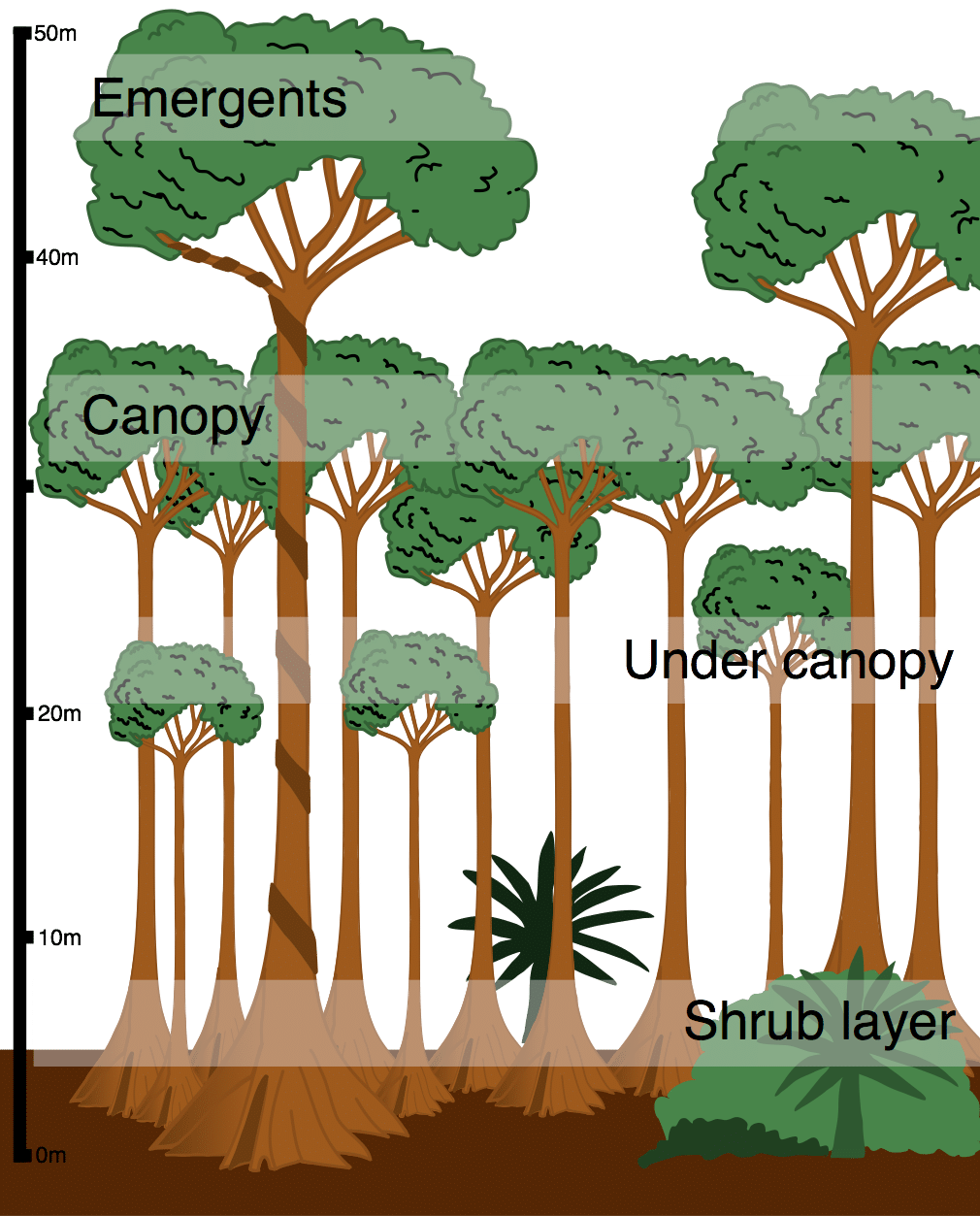 hight resolution of layers in the tropical rainforest