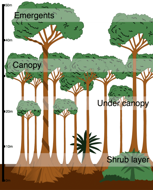 small resolution of layers in the tropical rainforest