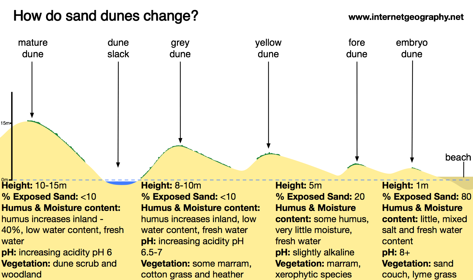 diagram of dune formation stem structure sand dunes internet geography