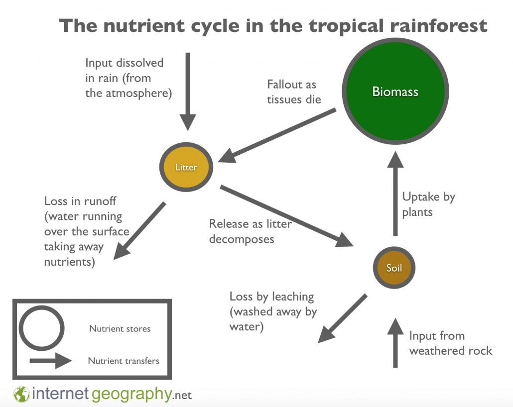 hight resolution of the nutrient cycle in the rainforest ecosystem
