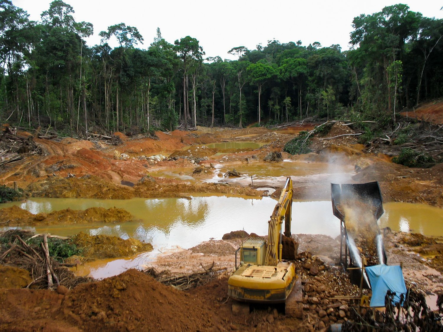 Tropical forests are incredibly biodiverse; What Are The Effects Of Deforestation In The Amazon Internet Geography