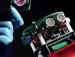 Beyni canlı olan robot yapıldı