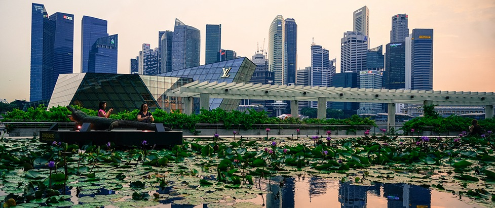 Return to Singapore: From chili crabs to names, numbers and protocol parameters