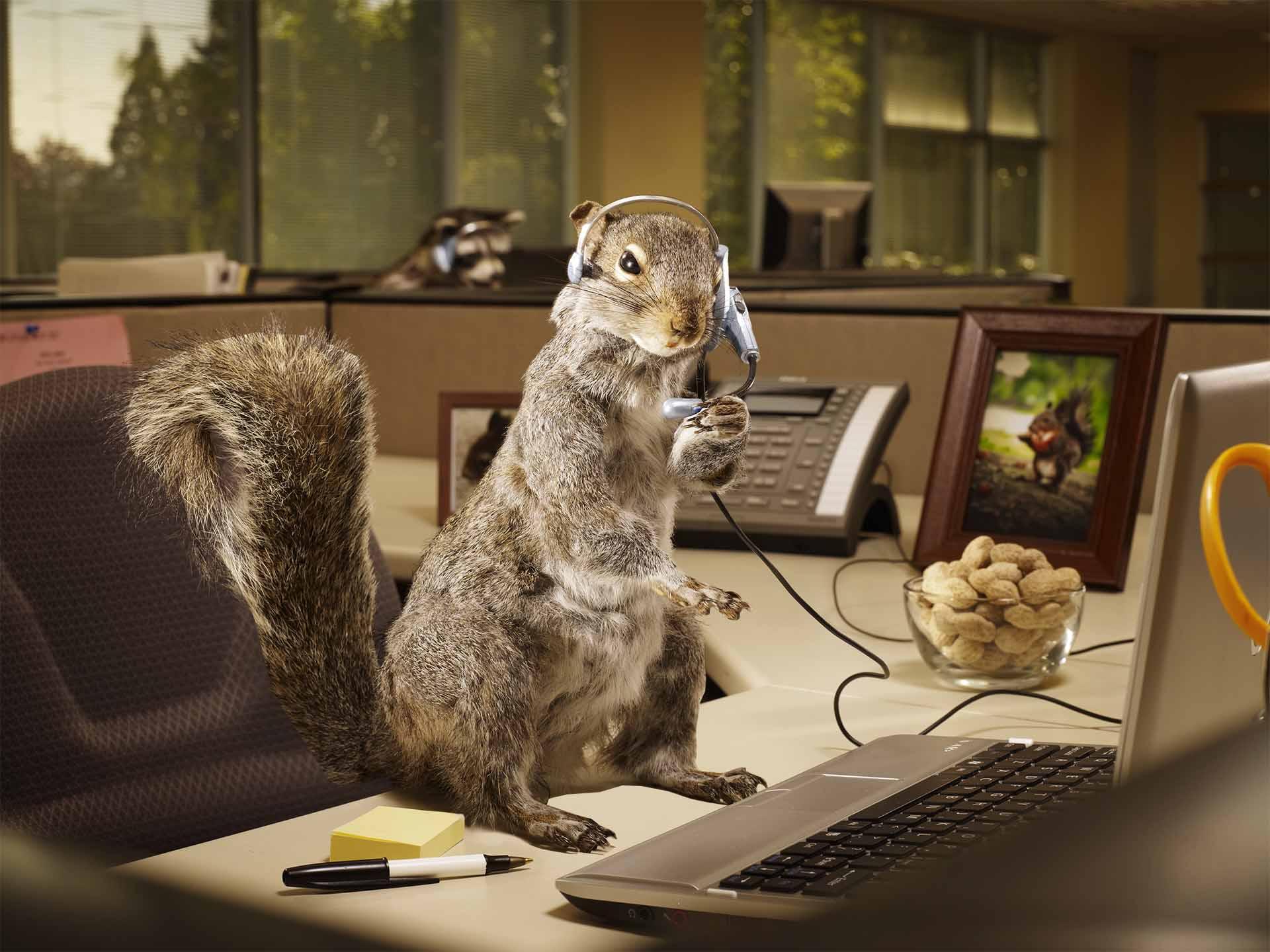 Blog Animal