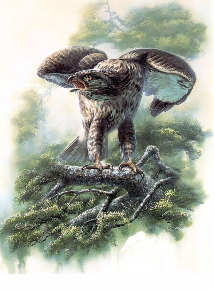 Beautiful Birds Paintings