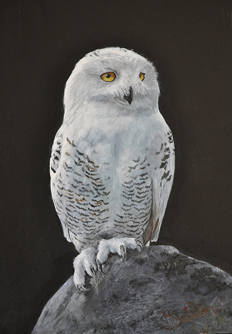 SnowyOwl_johnhalbert_birds in paintings