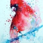 cardinal_tilenti_watercolor _painting
