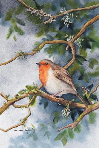 suevancoppenhagan_asian bird art