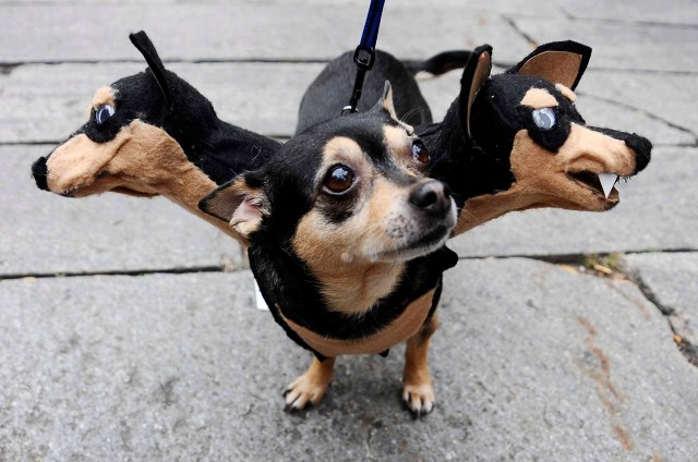 """""""howl-oween,"""" a dog costume contest"""