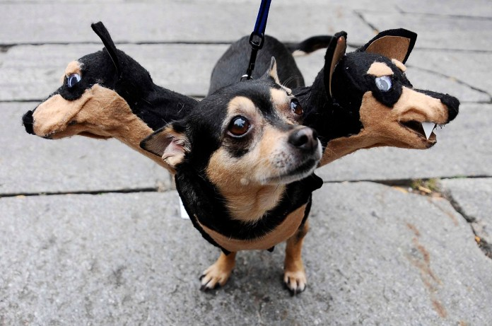 """howl-oween,"" a dog costume contest"