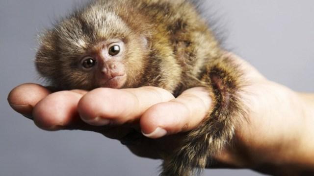 very small animals