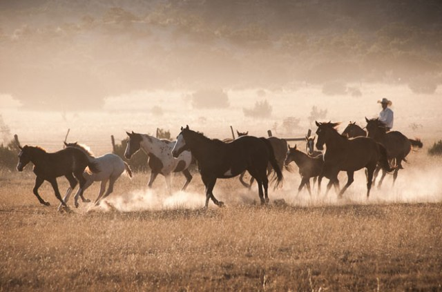 Horses and Ranch Lifestyle by Zach Doleac (11)