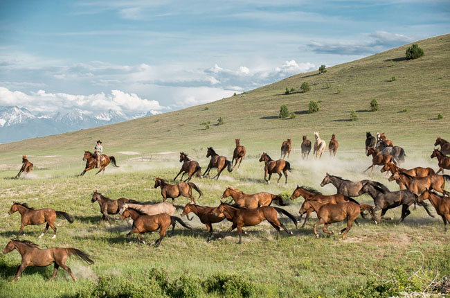 Horses and Ranch Lifestyle by Zach Doleac (6)