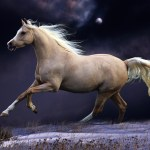 Photographs Of Horses Incredible Gallery Of Horses Pictures