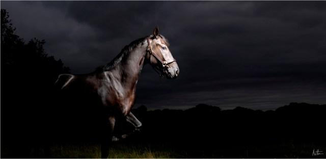 Horses Photography_Matthew Seed22