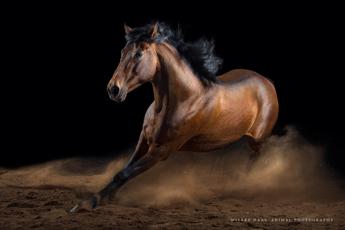 Beautiful-Horse-Running-Horses Photography