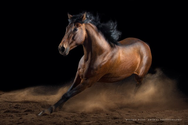 Horses Photography_Wiebke Haas