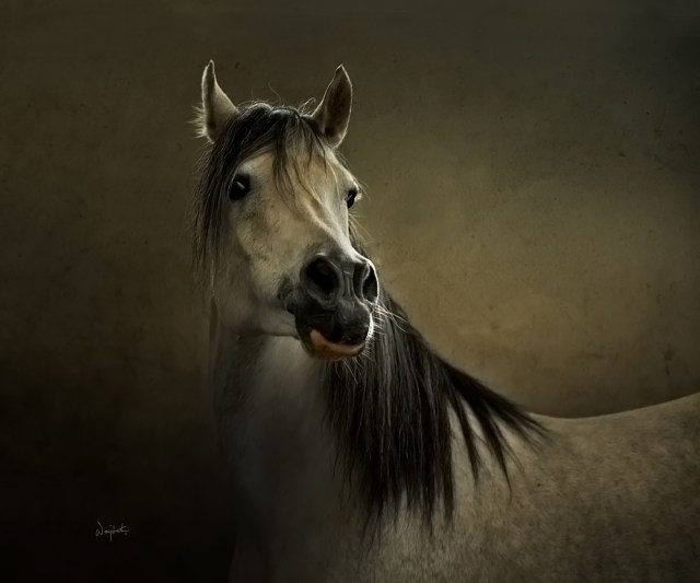 Horses Photography_Wojtek-Kwiatkowski-3 1