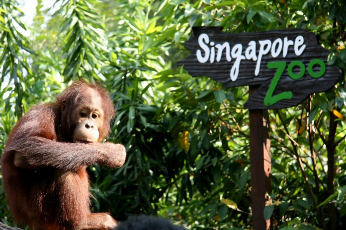 Pictures_and_Singapore_Travel_Tips (11)