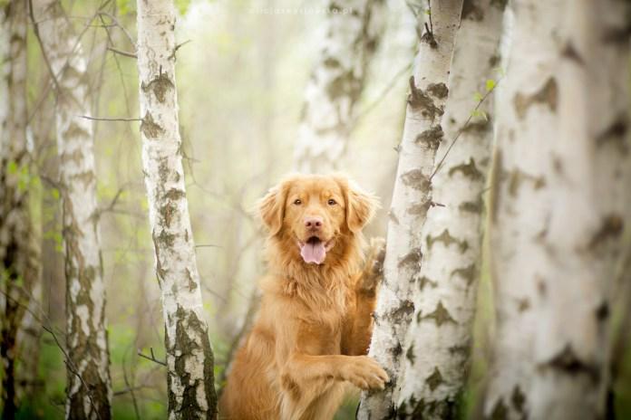 Dog Portraits Photography by Alicja Zmysłowska (15)