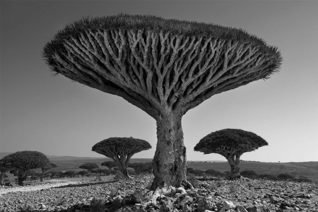 Famous_Photographs_of_Trees_by_Beth_Moon (11)
