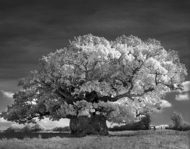 Famous_Photographs_of_Trees_by_Beth_Moon (27)