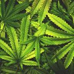 Marijuana_Smell Proof Bags