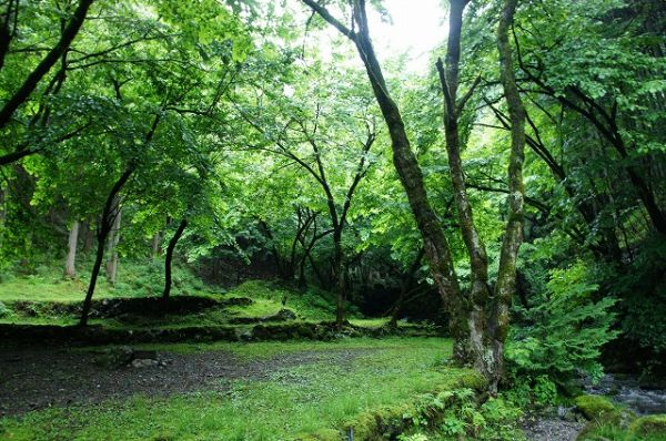Shiraiwakeiyuen Campground