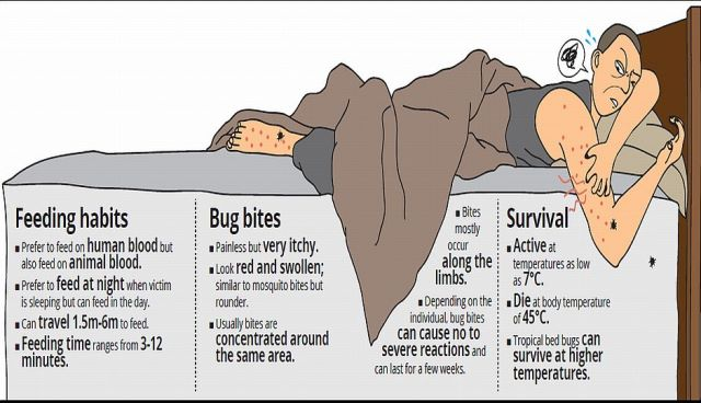 Bed Bugs prevalent in North Carolina