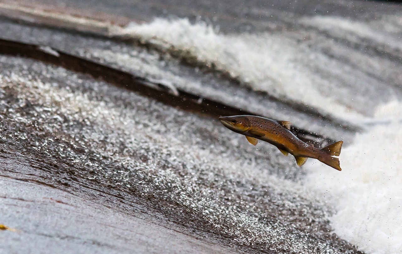 why some fish needs to leave the water.