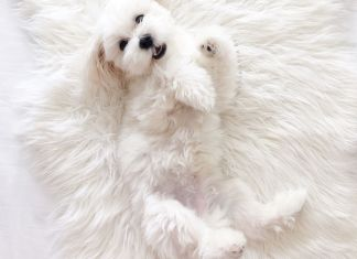 3 Grooming Tips for Dogs with White Fur.