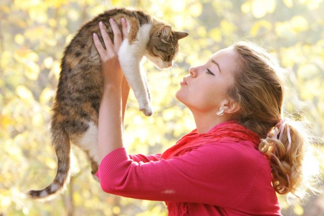 What Is Cat Insurance