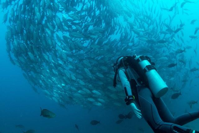 buying scuba gear guide