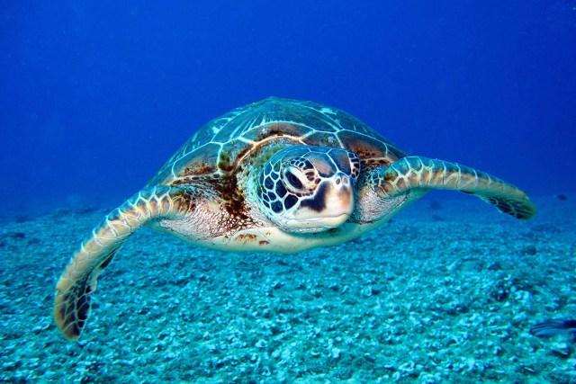 underwater ocean picture