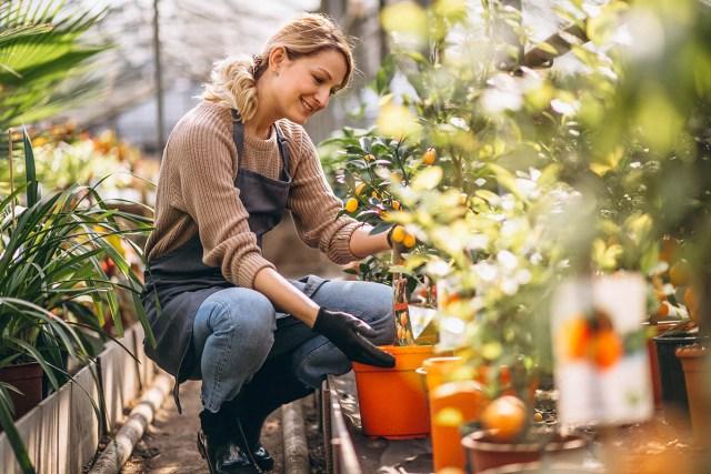 hobby such as gardening.