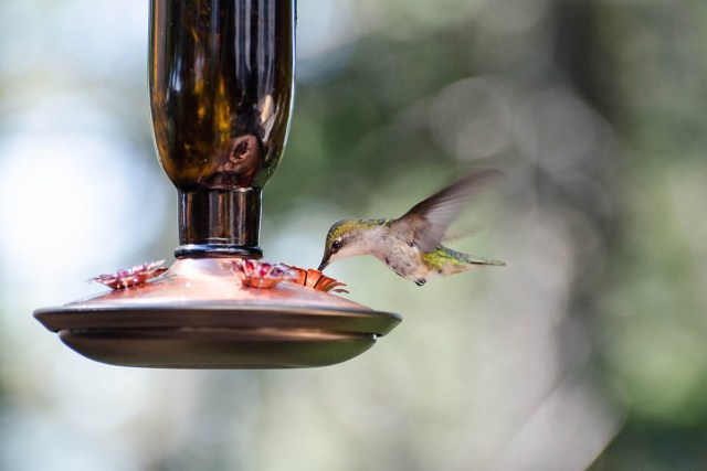 Types of hummingbird feeders