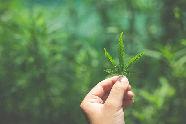 Under the Influence of Marijuana